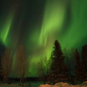 Northern Lights over the Scandinavian woods