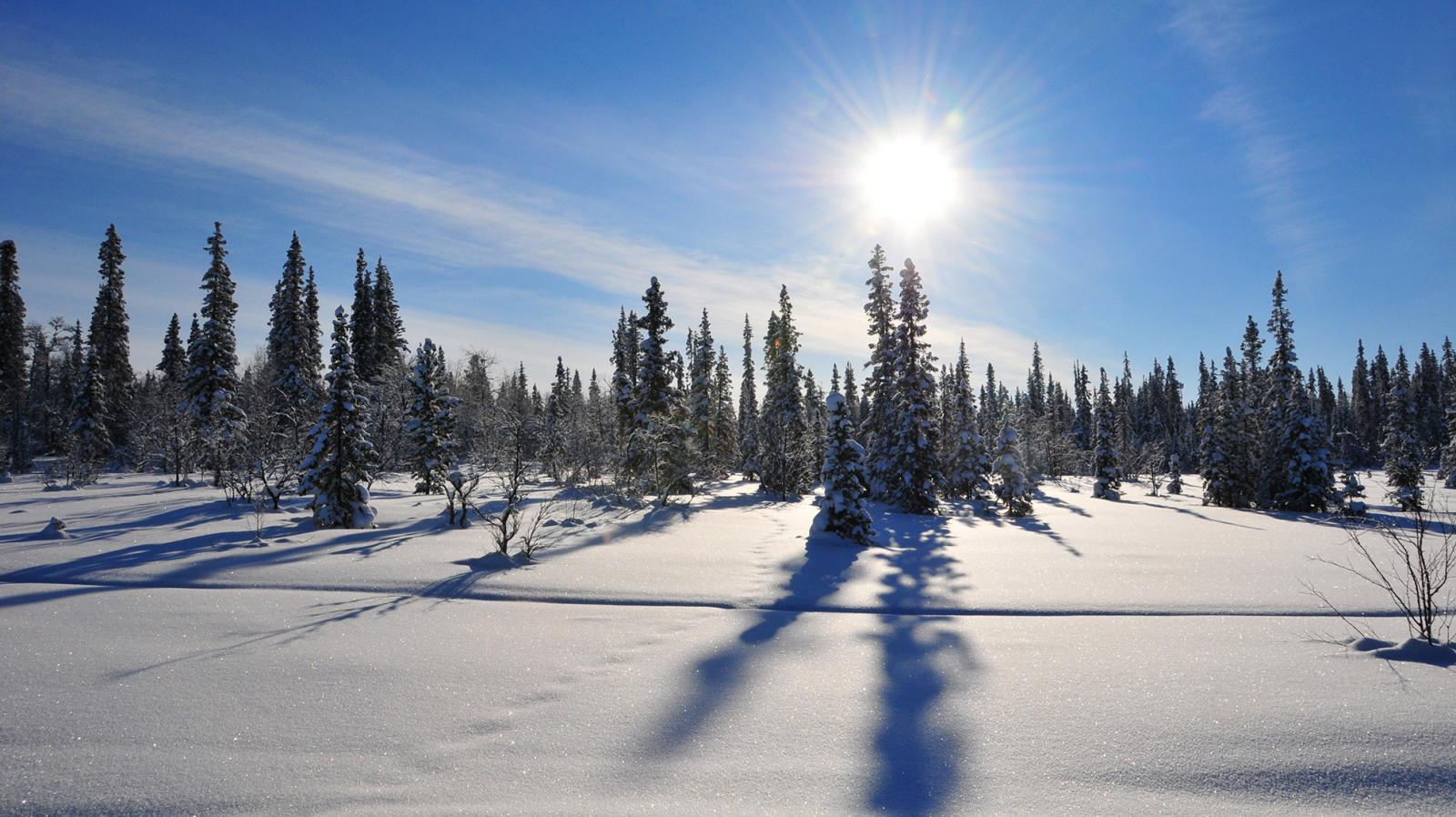 Arctic Winter Sweden