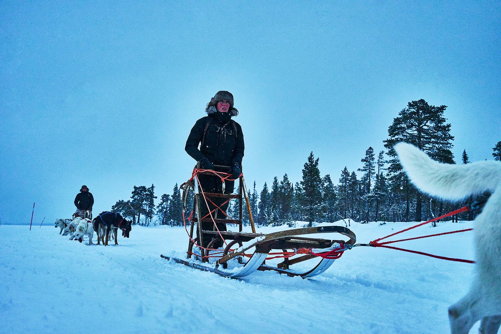 Dog Sleigh Lapland