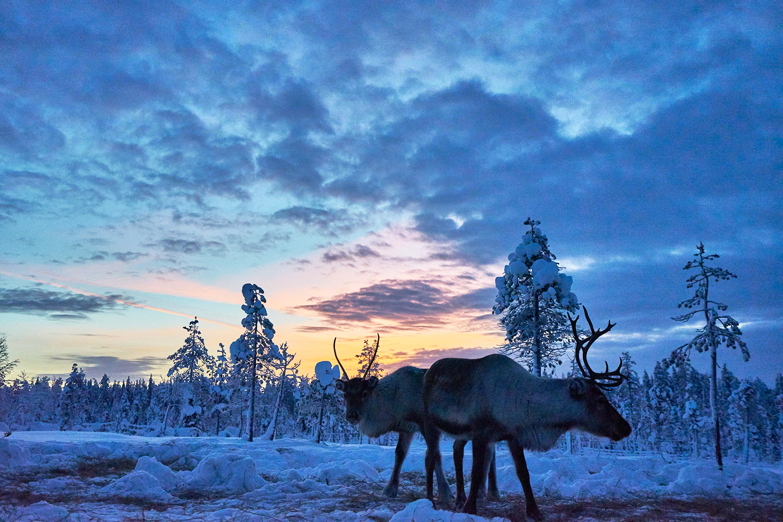 winter-landscape-reindeer