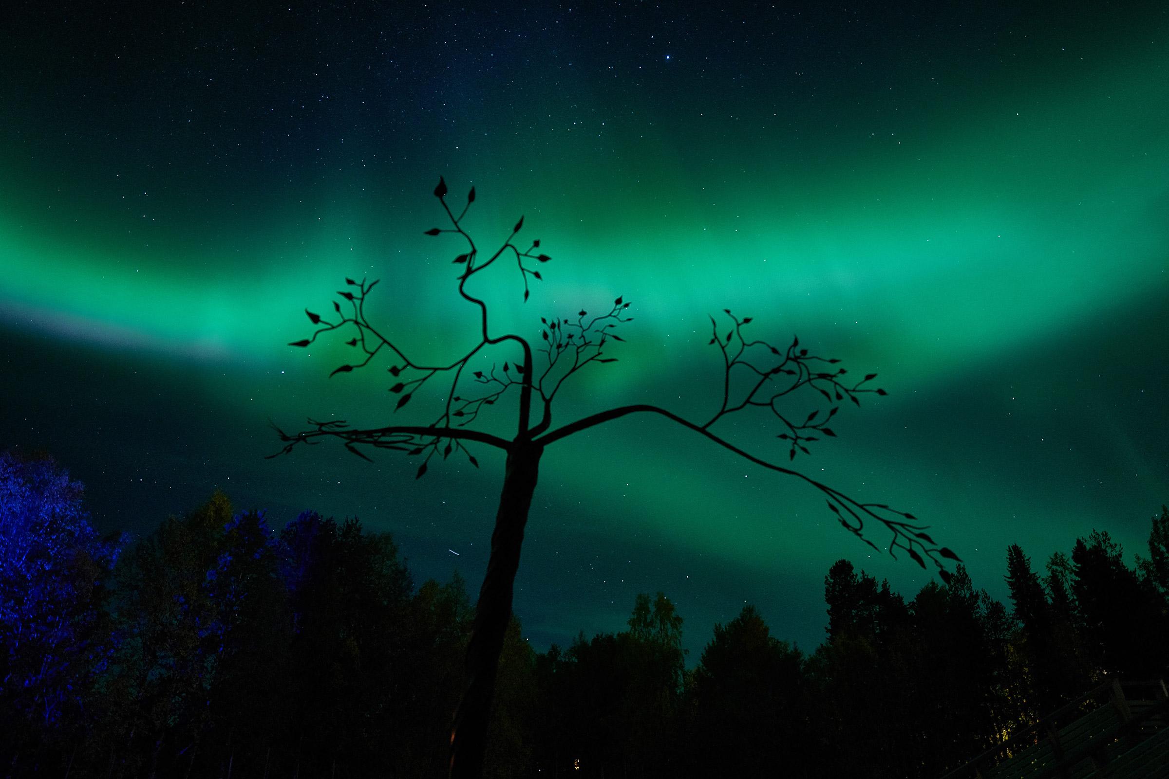 2018-09-14-Norrsken järnträd