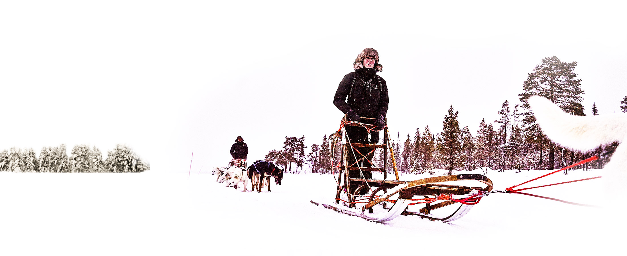 Lapland Guesthouse activities Dog-sleigh