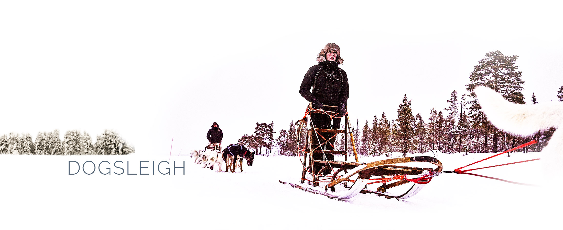 Guesthouse-activities_Dog-sleigh